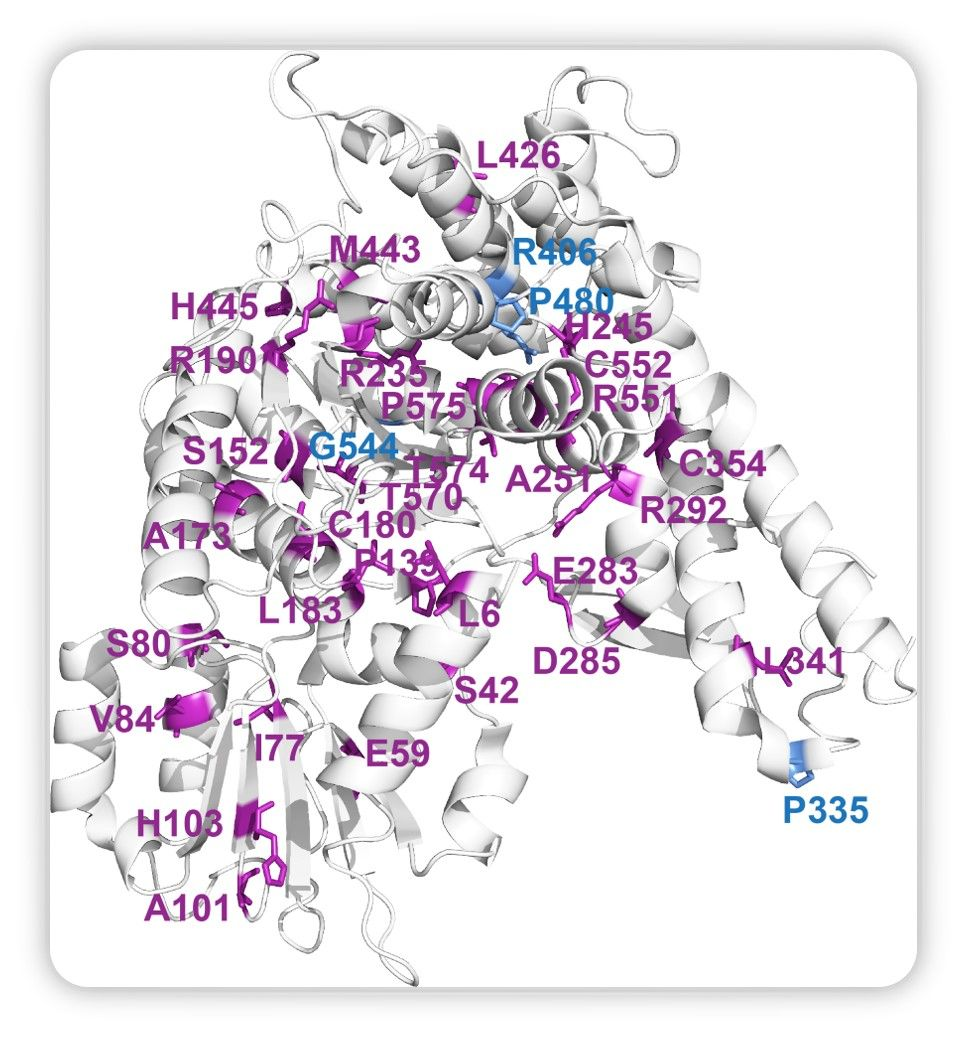 Protein aggregation cause by Munc-18 mutations